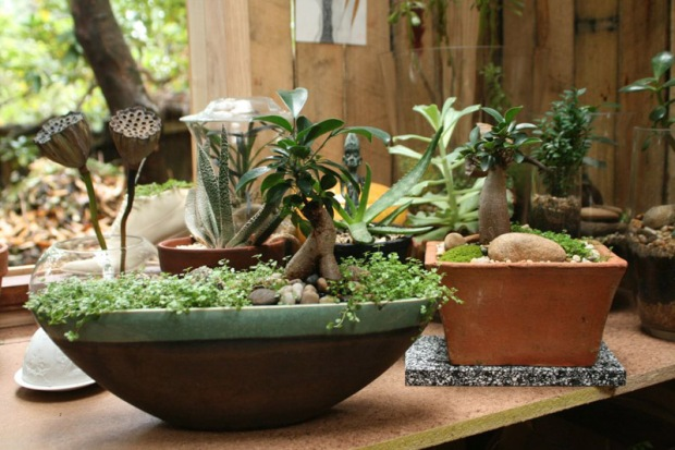 Carol Tregonning terrariums