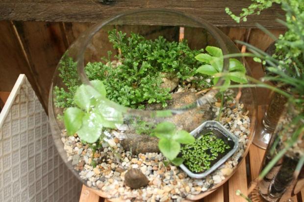 Greenman terrarium