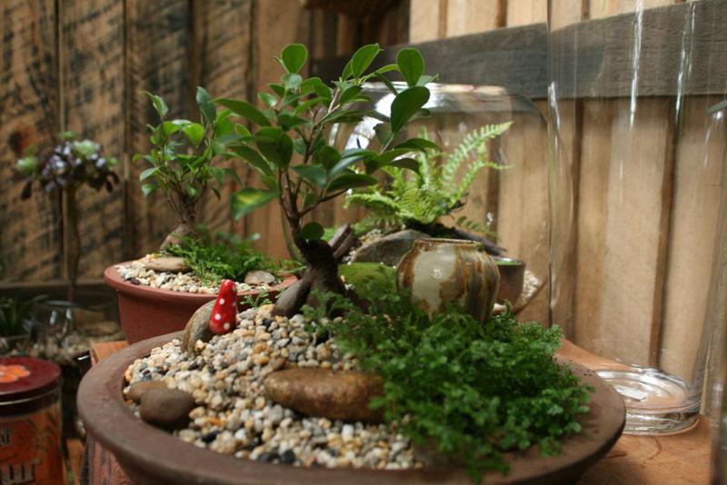 Carol Tregonning terrarium