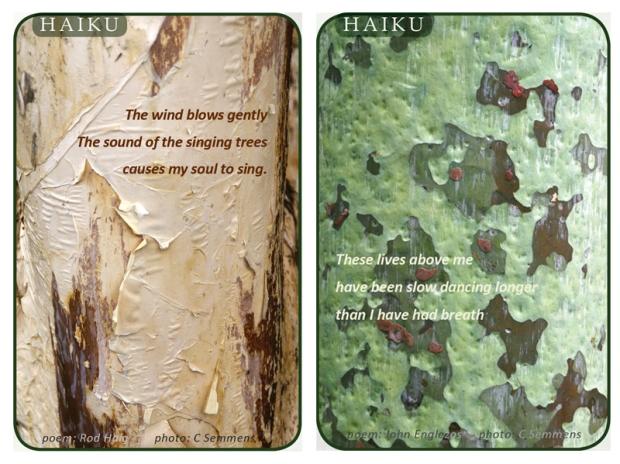 Haiku collage 1
